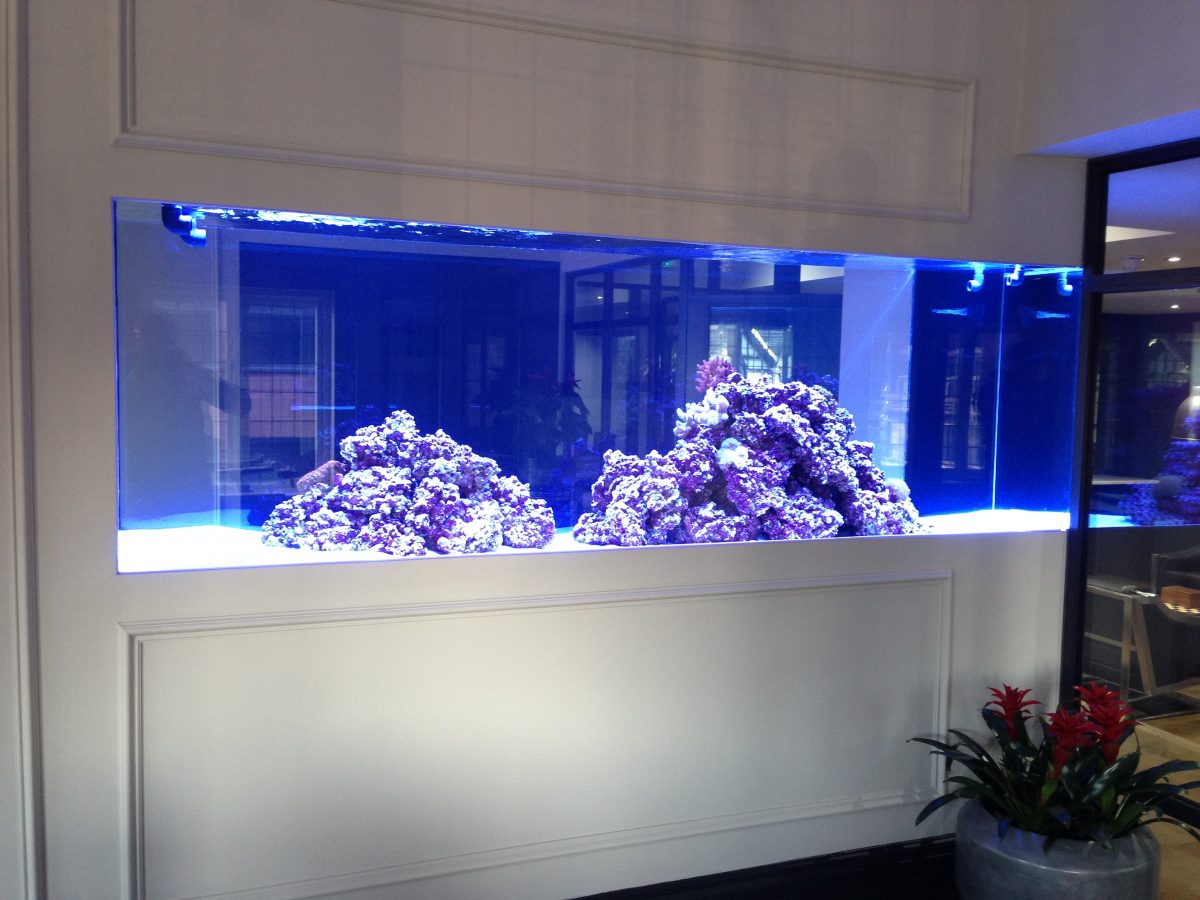 Choosing the Perfect Aquarium Design for Your Home