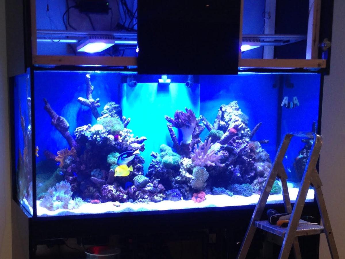 Video Update of Reef Aquarium in Derbyshire