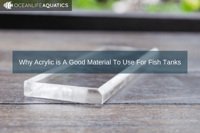 Why Acrylic is A Good Material To Use For Fish Tanks