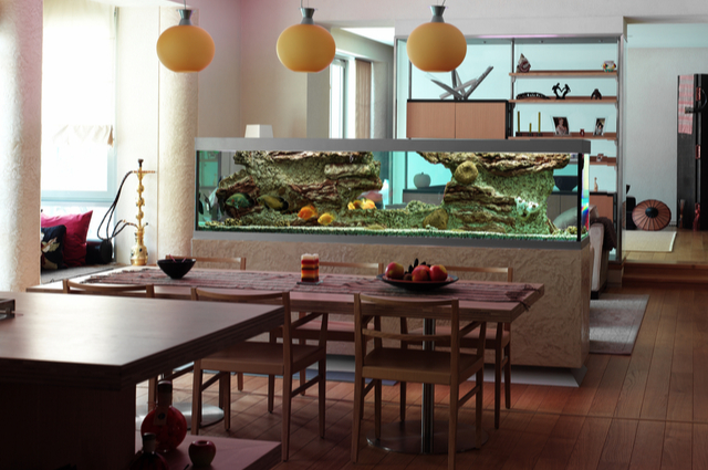 What to Consider in Aquarium Design