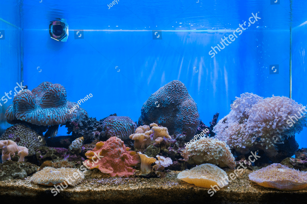 The Benefits of Aquarium Rental