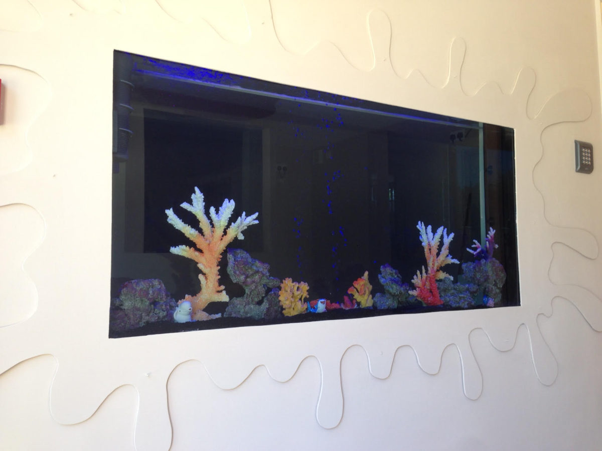 Built In Wall Fish Tank in Newcastle