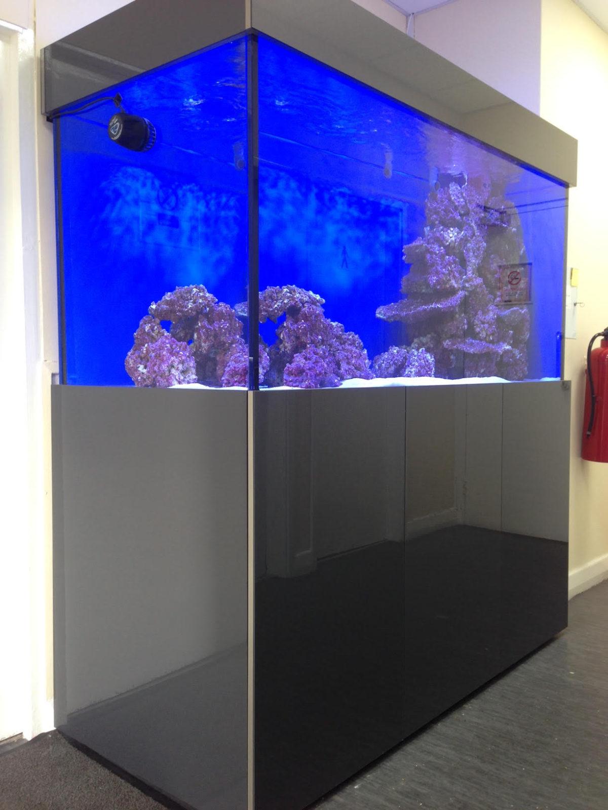 Bespoke Aquarium in Gateshead