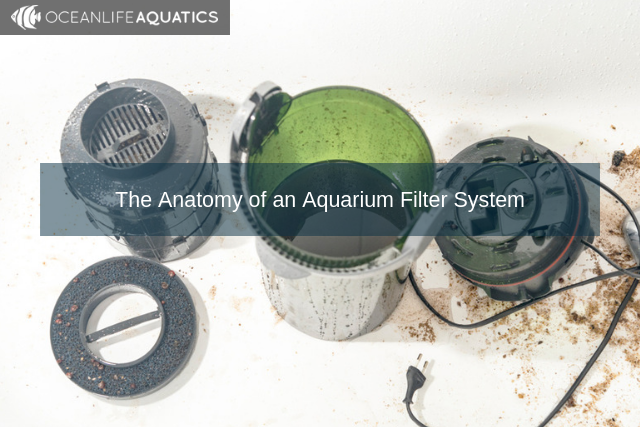 The Anatomy of an Aquarium Filter System