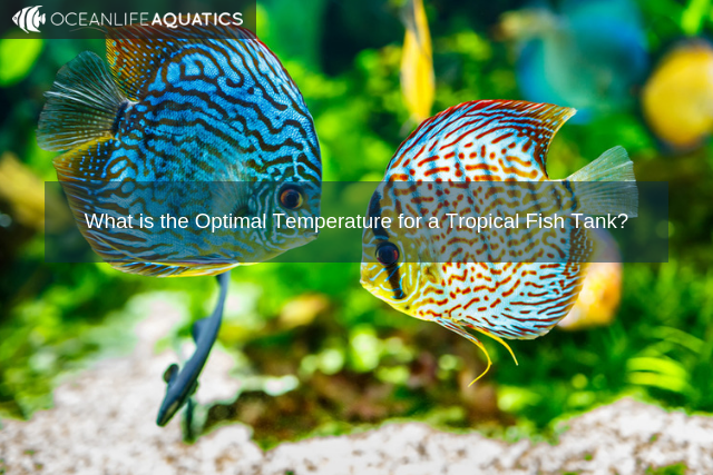 What is the Optimal Temperature for a Tropical Fish Tank?
