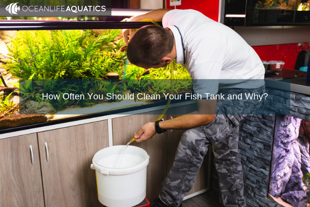 How Often You Should Clean Your Fish Tank and Why?