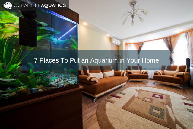 7 Places To Put an Aquarium in Your Home