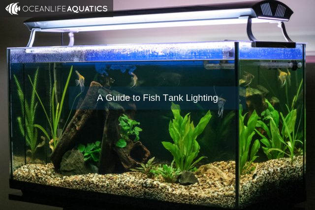 A Guide to Fish Tank Lighting