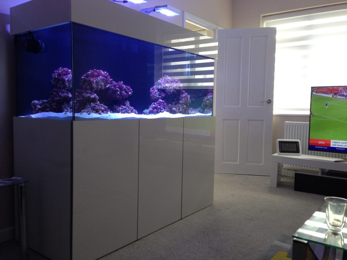 Reef Fish Tank Build and Install in Leeds