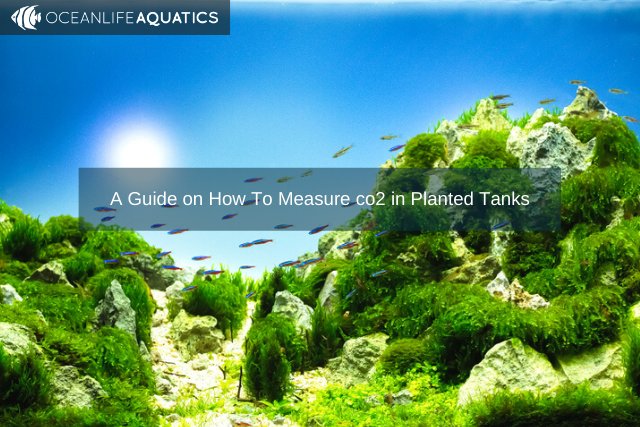 A Guide on How To Measure co2 in Planted Tanks