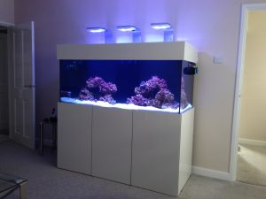 Custom aquarium build