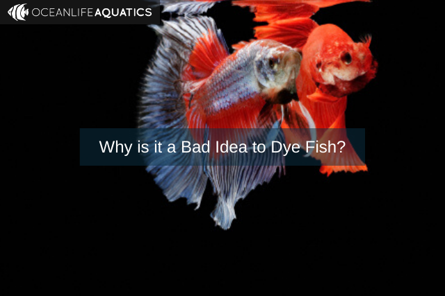 Why is it a Bad Idea to Dye Fish